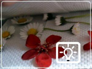 peuter dreumes activiteit - droogbloemen